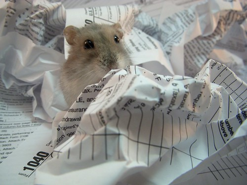 Hamster Pays the Cute Tax