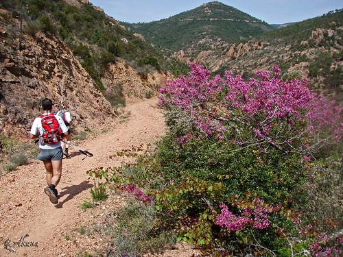Trail_des_balcons_d_azur_2008 (267)