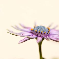 Flower (aebni) Tags: flower macro fleur d50 nikon sigma 11 28 105mm abigfave platinumheartaward ahqmacro