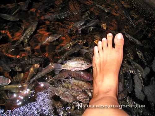 giant garra rufa fishspa