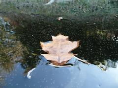 Frozen I (ocramsch) Tags: reflection ice leaf caught icebound