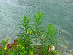 Plants on River