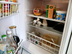 Today's menu: cat (fatseth) Tags: food animal cat fridge funny chat gato morel frigo lolcat fatseth gensric
