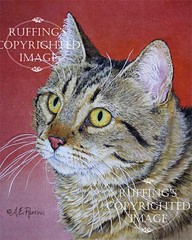 """""""Tabby Cat on Red"""" AER81 by A E Ruffing"""