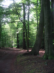 bosque Eversten (kasia o) Tags: wood tree green nature natur grn holz baum oldenburg weg kasiaortiz everstenholz