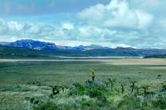 Sudirman Mountains, Lake Habbema (brad.schram) Tags: irianjaya alpinegrassland lakehabbema sudirmanmountains
