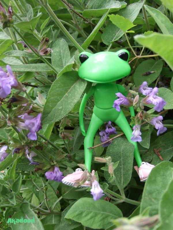 My Wonder Frog... Nels... à la plage... p3 2592524251_caaa6c8488_o