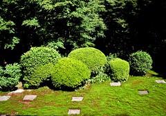 shaped azaleas, paving stones (lao_ren100) Tags: japan stone garden grid kyoto tofukuji zen round azalea loren madsen laoren100