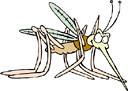 mosquito (3doel82) Tags: fish bird animals insect gambar koleksi ikan belajar burung binatang carnivora serangga mamalia amphibi
