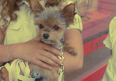 v   y     ..         P   (D o 7 ) Tags: pet baby brown cute lovely doog