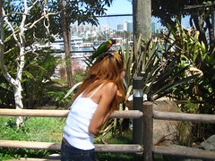 IMG_1570 (cbg_rocketfever) Tags: california birds lorikeets longbeachaquarium