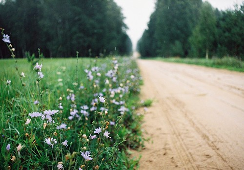ak, tik mīlīgi, puķītes ceļmalā!