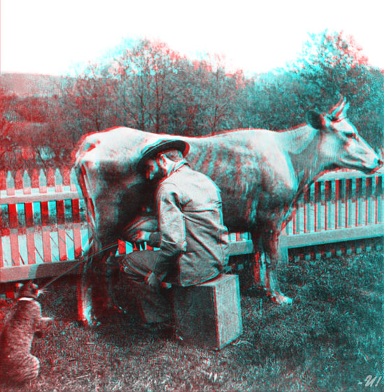 One Very Happy Cat - Anaglyph 3D