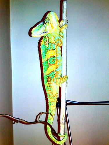 ONO Part III: Chameleon 2