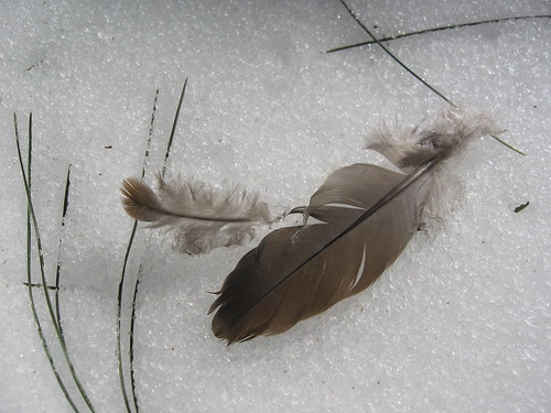 Feathers in Snow