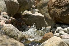 Erholungspark Marzahn (Chris Grabert) Tags: wasser marzahn erholungspark