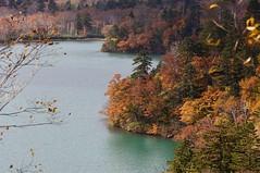 オコタンペ湖畔の紅葉