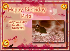 HAPPY BIRTHDAY RITA! Quack, quack, quack!! (fantartsy JJ *2013 year of LOVE!*) Tags: birthday friends blessings happybirthday hugs greetingcard iloveit blueribbonwinner platinumphoto diamondclassphotographer flickrdiamond citrit lovecelebrations