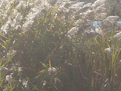 582 (riverbendwoman) Tags: trees tree leaves berries path wetlands walkways paths naturepreserve glaciallake