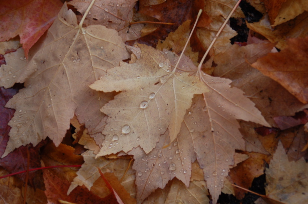 autumn_leaves_waterdrops_1row