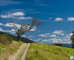 Country Lane (David de Groot) Tags: road blue sky panorama tree green grass clouds rural fence landscape spring track country australia lane cumulus queensland cloudscape cedarcreek blackshoulderedkite australasianfigbird