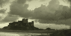 Wind Swept.... (law_keven) Tags: sea england blackandwhite castles water birds clouds landscape moody northumberland kings bamburghcastle ysplixblack