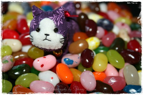 Suki say's swimming in Jelly Belly's is like a slice of heaven!