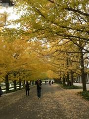 081115_昭和記念公園
