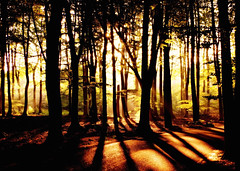 What Your Soul Sings (Mieke Vos Photographics) Tags: wood light shadow netherlands forest 1 shadows nederland explore nederlands vierhouten miekevos imgp1510 rubyphotographer tsoerel