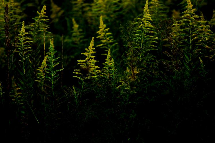 grass。