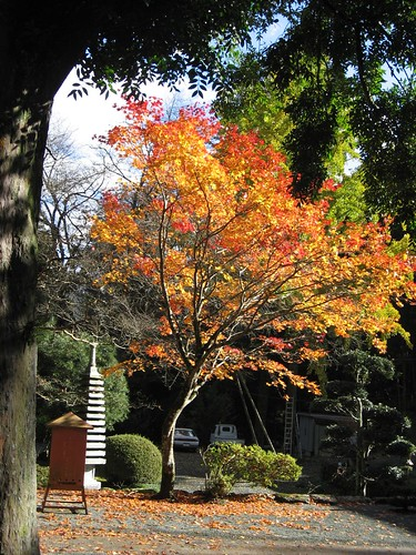 Autumn in the temple-15