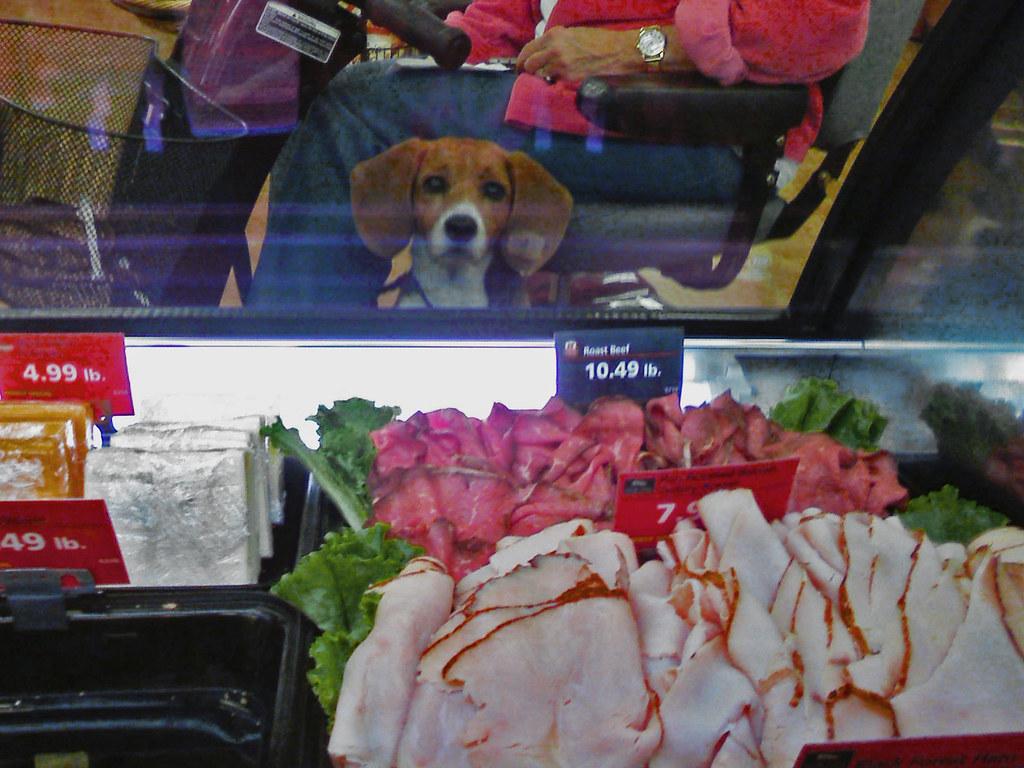 Service Dog Torture