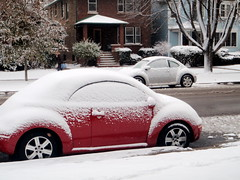 Snowy Beetle