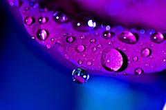 Happy Saturday =) (mslori411 (Flickr break)) Tags: blue macro drops purple bokeh diamondstars doubledragons bokehdrops perfectpurplesaturdays bokehholics bokehholicsanonymous