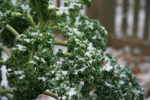 snowflakes on kale