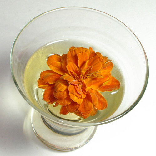 Livorno Cocktail