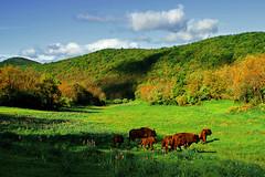 Meravigliosa creatura. (Oscar Martn Antn) Tags: light mountains luz european bison palencia europeos montaapalentina bisontes sancebriandemud