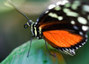 """Van2011 - aquar - butterfly profile 02 • <a style=""""font-size:0.8em;"""" href=""""http://www.flickr.com/photos/30765416@N06/5798131380/"""" target=""""_blank"""">View on Flickr</a>"""
