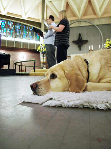 Doggy at Lewisham Choral Society