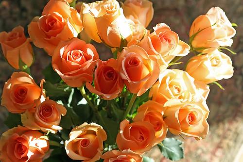 Two Dozen Peach Roses