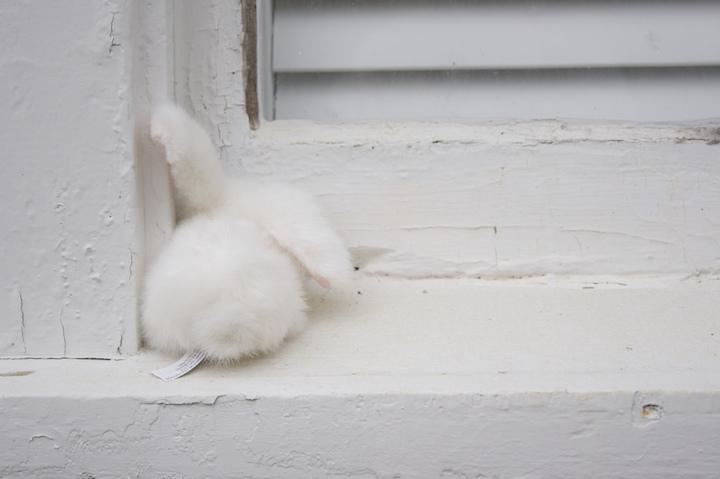 2492816834 72f5f1f412 o bunny behind