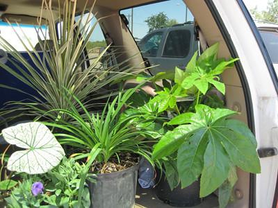 Backseat full of plants