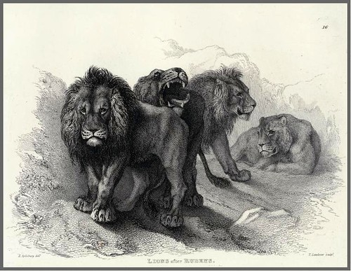 05-Lions after Rubens