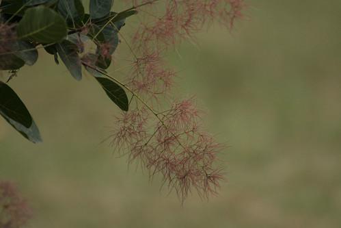 Macro Shot of Pink Flowers - IMG_2265