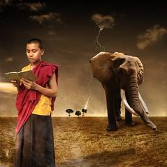 The reader (Chopak) Tags: boy portrait sky elephant tree texture photoshop square landscape reading book kid buddhist surreal monk tibetan freetibet jewelryornaments thunders oldpaper darkcolors jotblog infinestyle dreamwatcher stealingsha