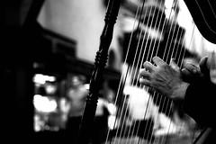 (NessunaTraccia) Tags: bw italy music hands mani manos musica bologna arpa bnvitadistrada arpistidistrada