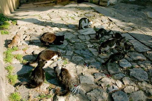 Кошки завтракают