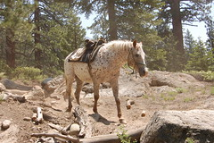 20080627 Riderless Horse