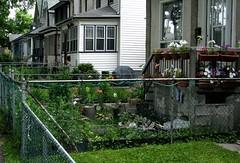 Garden on Lipton