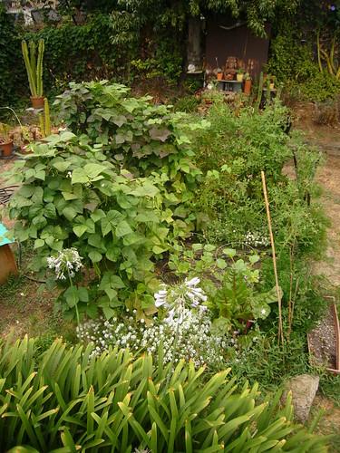 Garden 2008.7.18 - 2